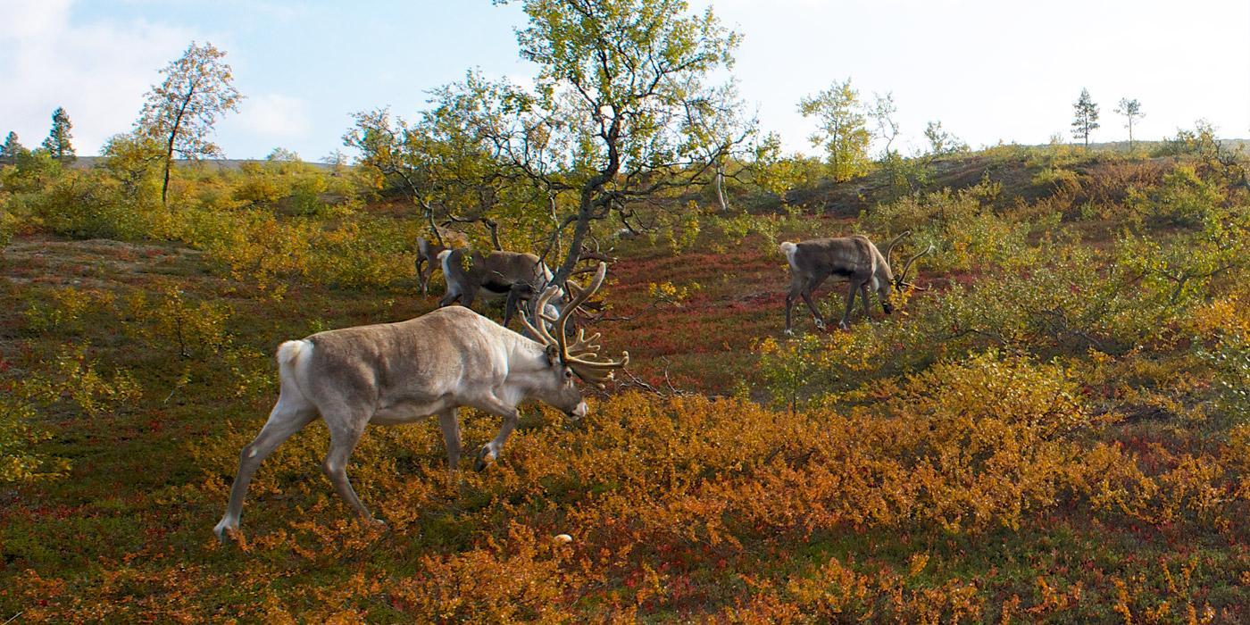 Финляндия, парк Урхо Кеконен