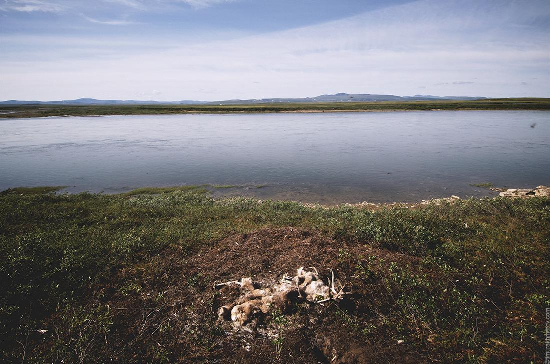Бывший олень на фоне реки Амгуэма