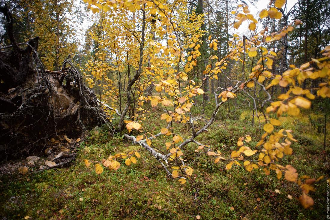 Финляндия, парк Урхо Кекконен