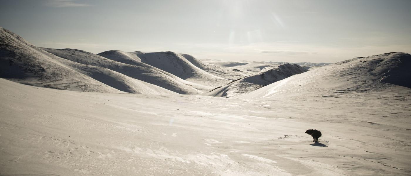 На лыжах по Чукотке