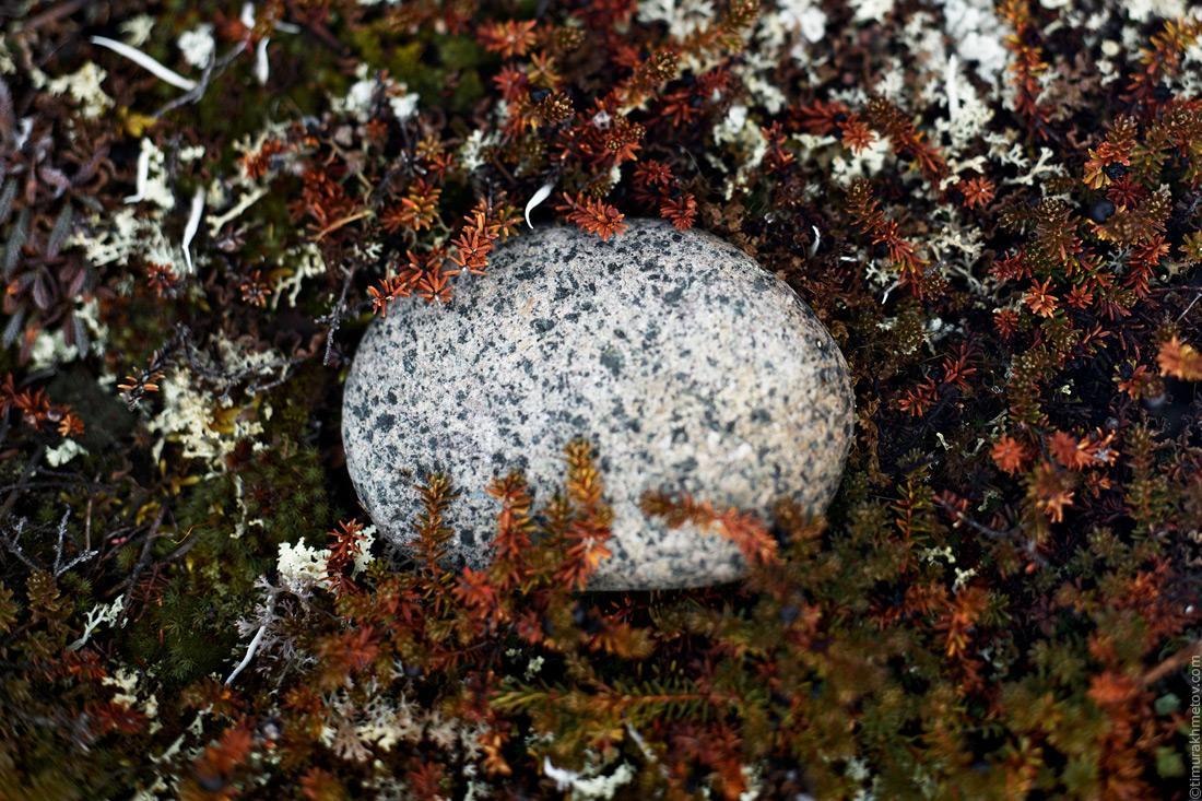 Камень в тундре
