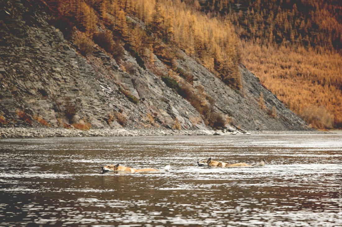 Сырник и Дина плавают по реке