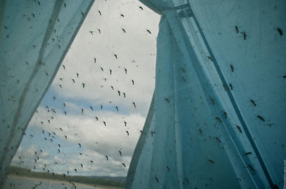 Комары в палатке