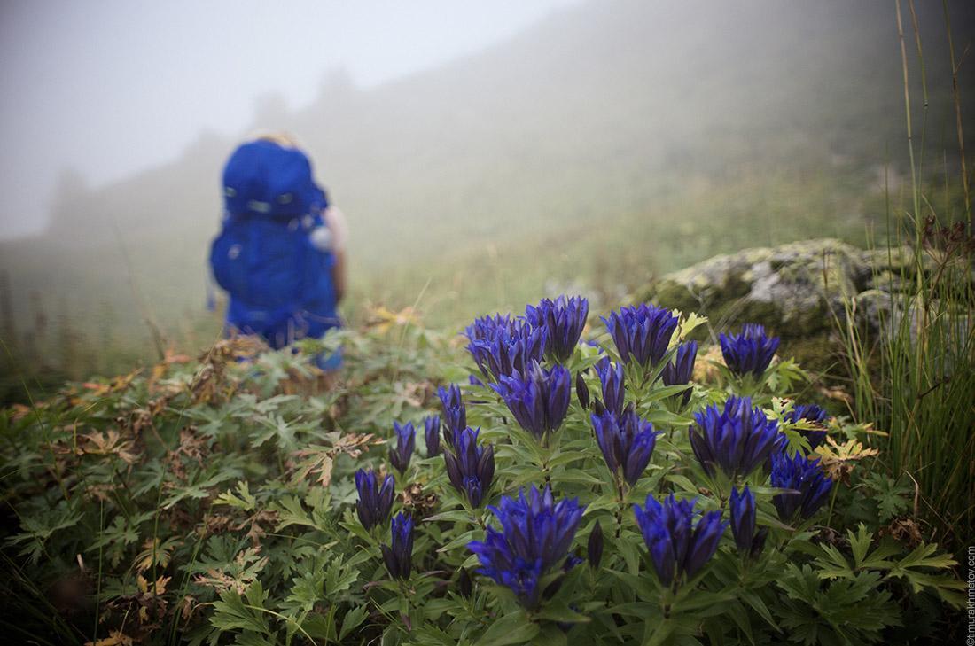 Кавказ, синие цветы