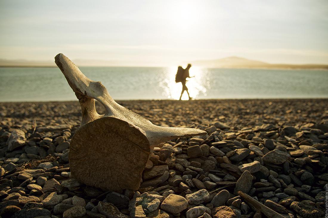 Чукотка, берег океана, китовый позвонок