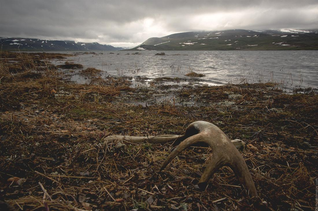 Рога на озере Коолен