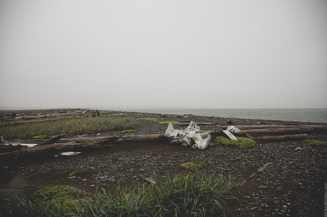 Китовые кости на косе Уэлен