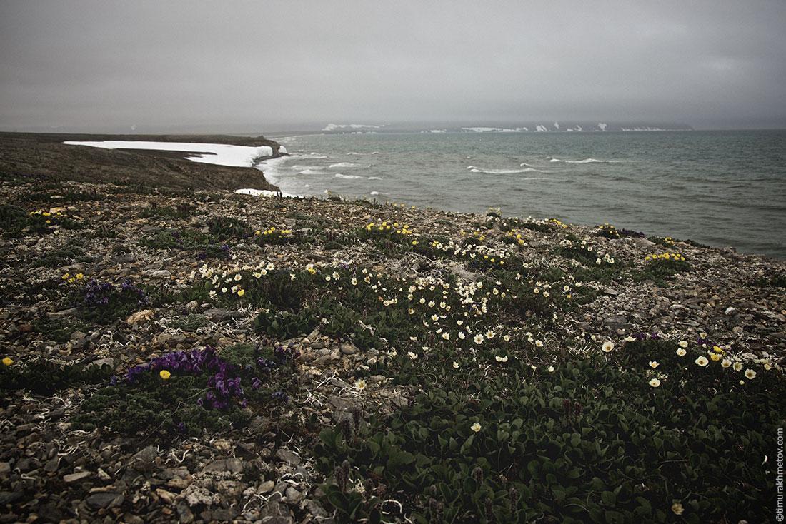 Берег океана и цветы