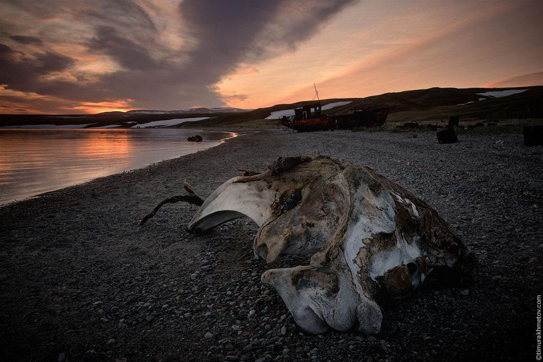 Китовые кости