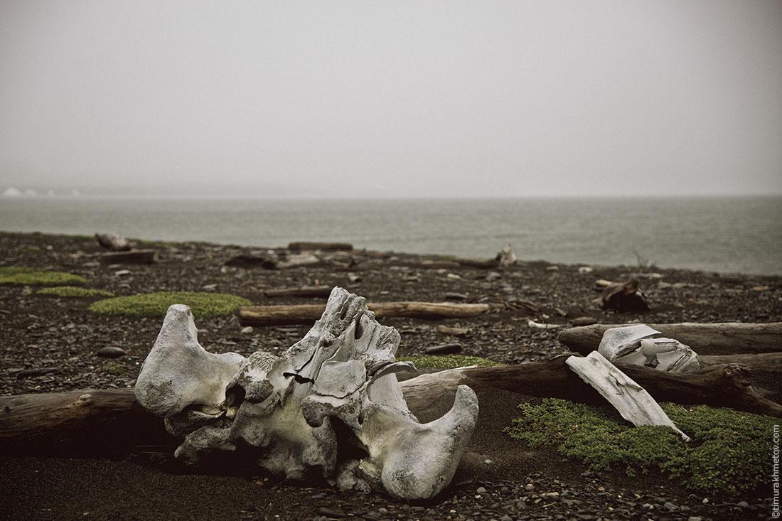 Чукотка, берег океана